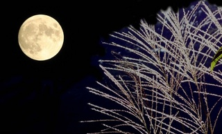 購入特典:秋の夜長にピッタリのセミナーCD《 時間力の磨き方 》 をプレゼント♪